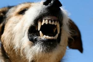 dog bites homeowners insurance