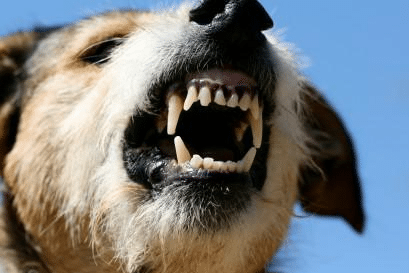 dog bites homeowners insurance